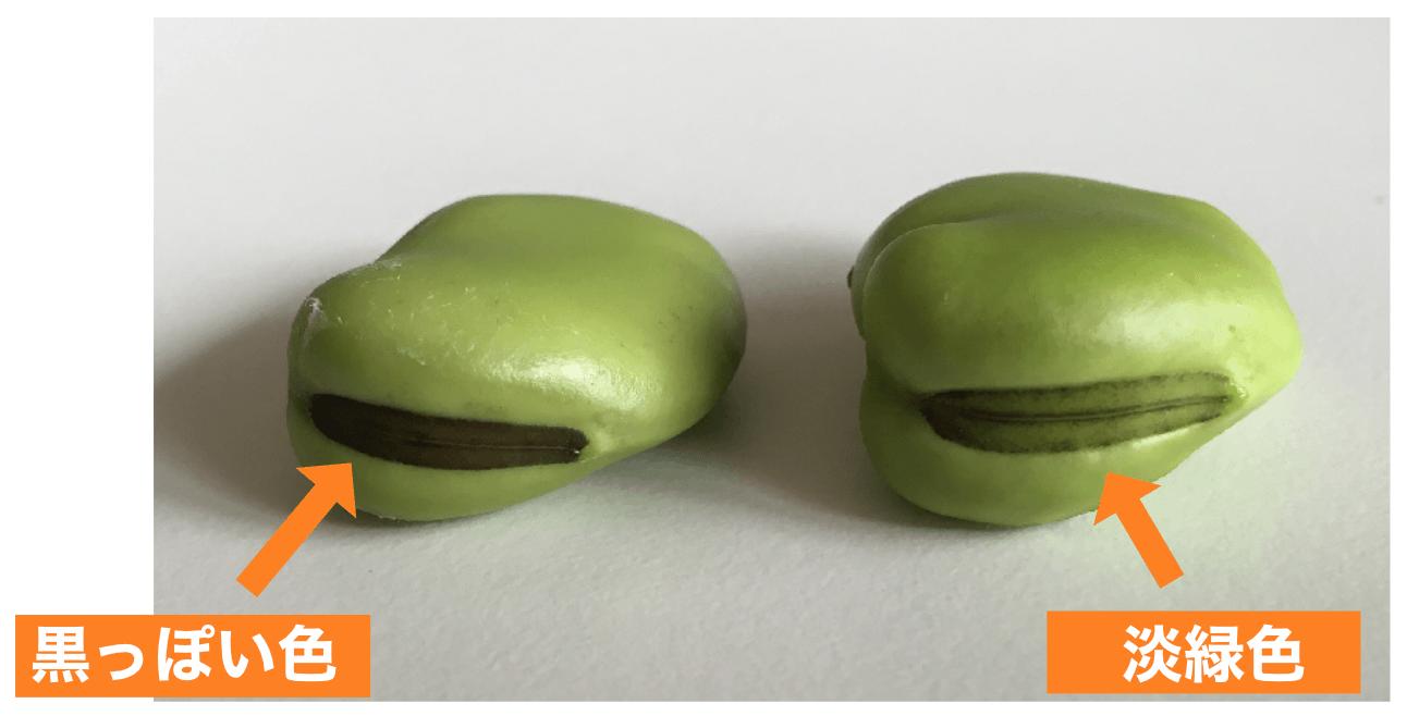 Pic basic 30 bean types